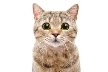 france-relance-:-du-nouveau-pour-les-associations-de-protection-animale