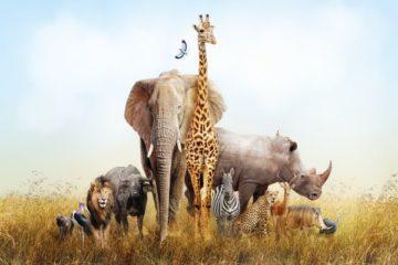 coronavirus-(covid-19)-:-les-aides-pour-les-parcs-zoologiques-et-les-cirques-prolongees-!