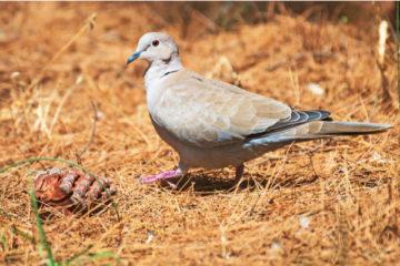 grippe-aviaire-:-il-faut-desormais-tenir-compte-de-la-chasse
